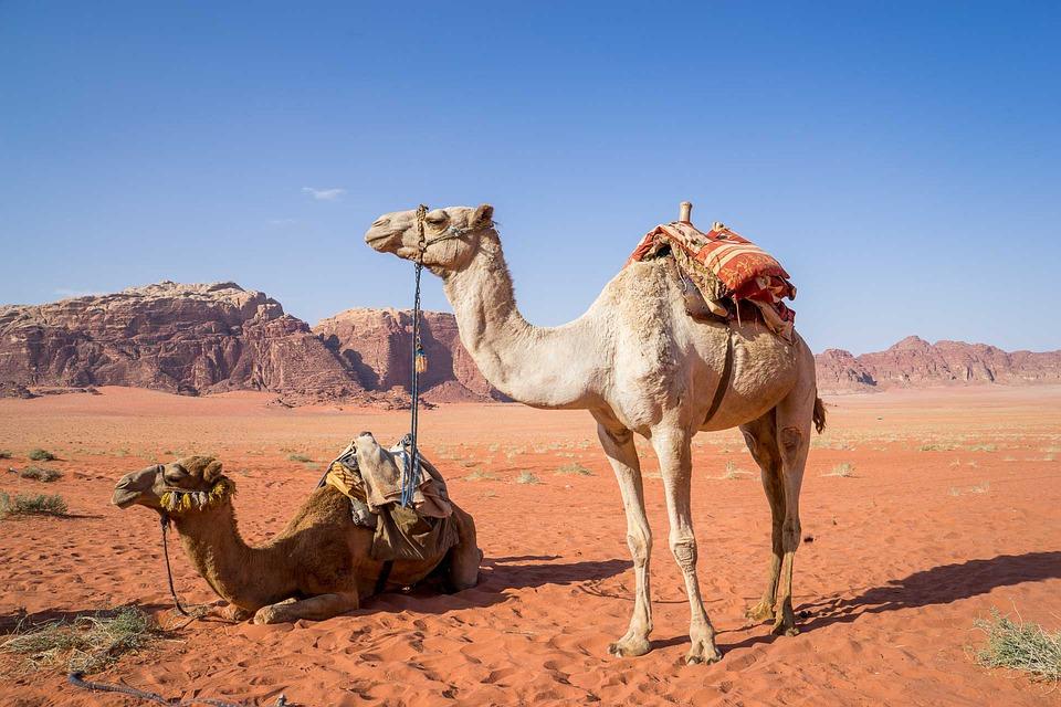 billiga flyg till jordanien